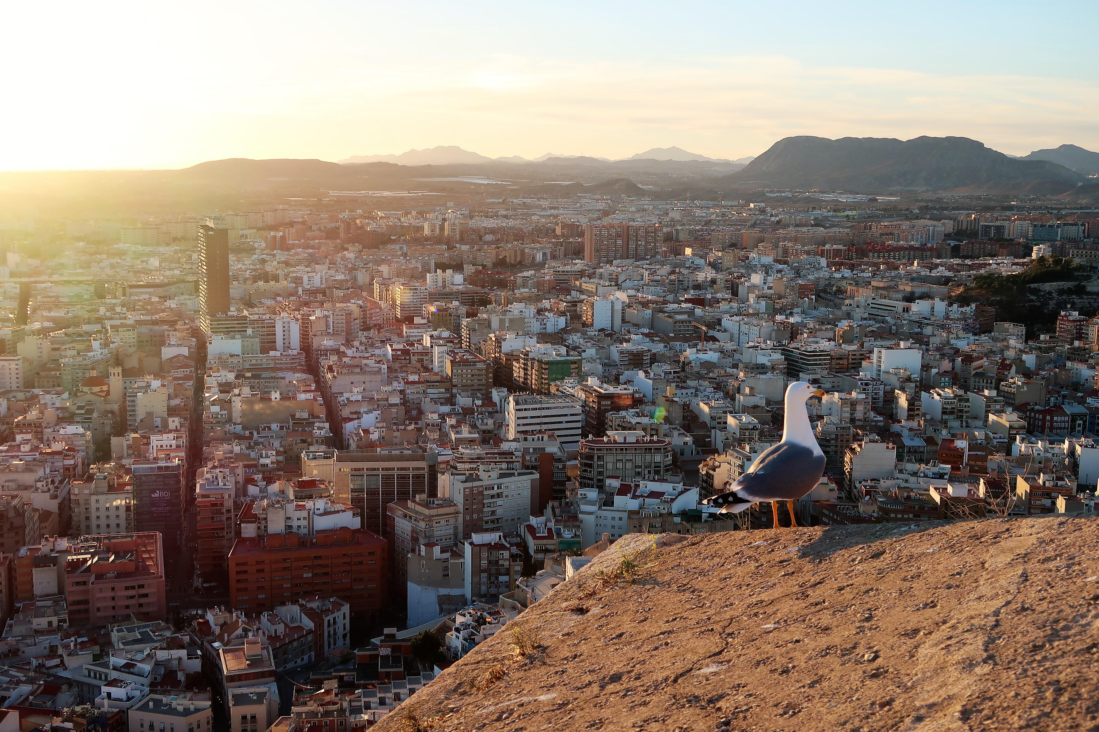 Tak wygląda Alicante w grudniu